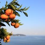 20131203-orange-0083