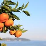 20131203-orange-0109