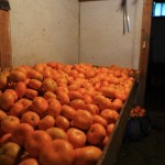 20131203-orange-0137