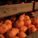 20131203-orange-0161