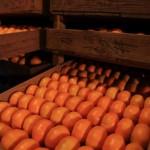 20131203-orange-0167