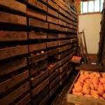 20131203-orange-0175