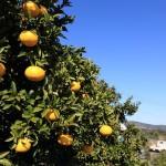 20131214-orange-0060