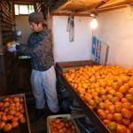 20131214-orange-0281