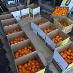 20131214-orange-0380