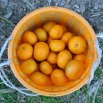 20131214-orange-0395