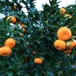 20131214-orange-0416