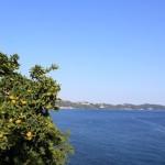 2013_11_06-bonsai-0363